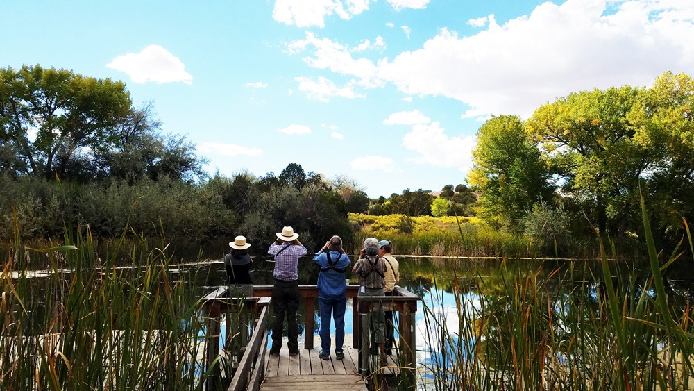 Leonora Curtin Wetland Preserve - pier bird watching