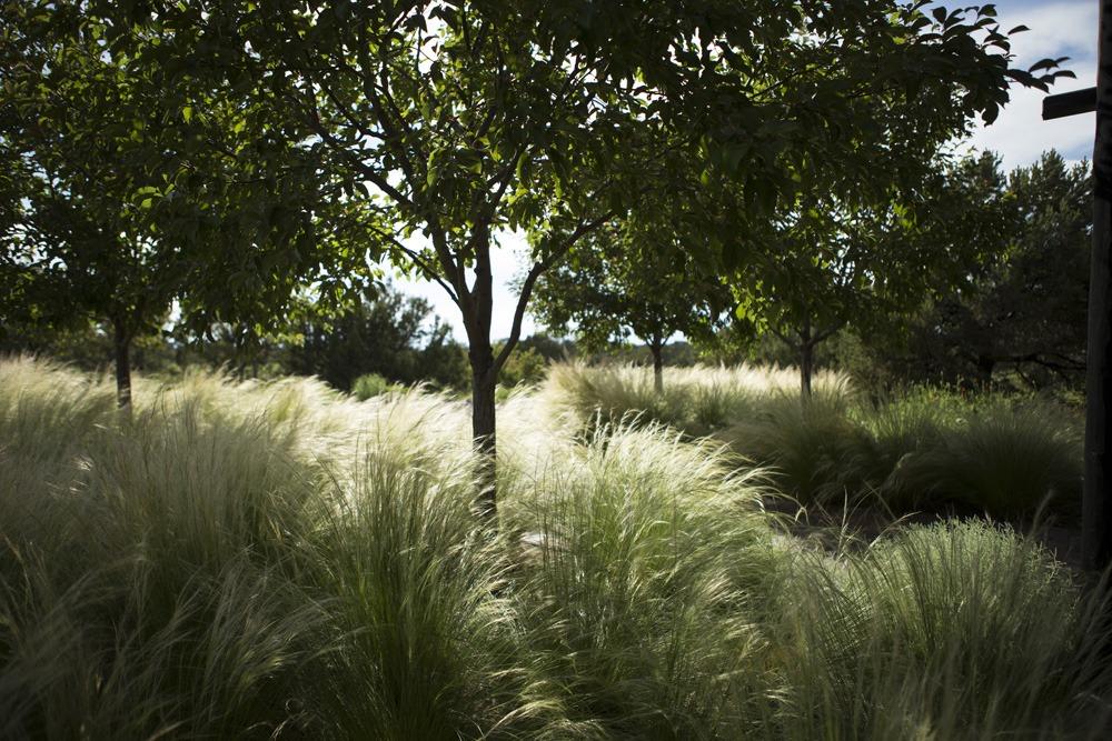 Santa Fe Landscape Garden Design